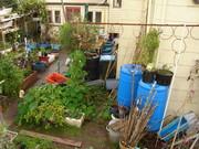 Winter Garden 2010-07