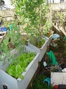 Winter Garden 2010-03