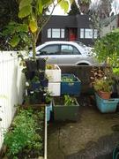 Winter Garden 2010-04