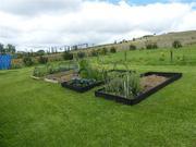 Work in progress- veggie gardens