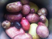 homegrown spuds