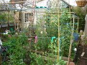Winter Garden 2010-11