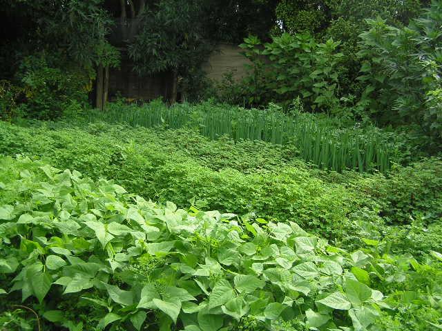 vegetables in clearings