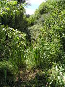 Food Forests NZ