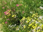 diversity of wild flowers