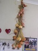 Brown Onion& shallots
