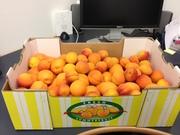 yummy Central Otago apricots