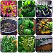Garden Summer 2013-14