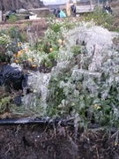 a bit frosty this morning