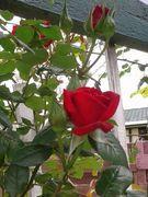 Photo uploaded on November 6, 2014