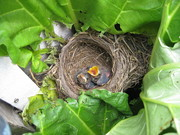 new residents at the community garden