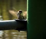 Πτηνά......και άλλες παρέες...