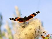 Πεταλούδες-Εντομα!