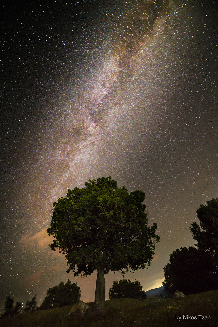 A tree looks at the Galaxy