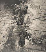Ilse Bing - Untitled (Flowerpots in the Gutter), Paris 1952