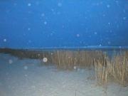 Beach Orbs