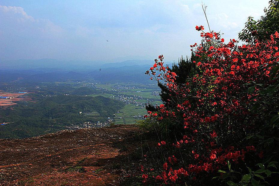 Agnes Chong: 南台山的映山红