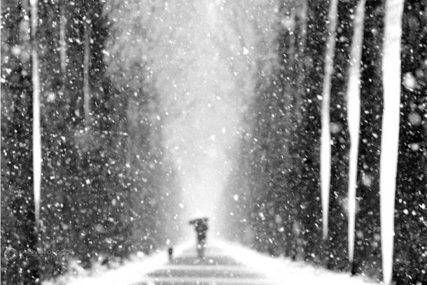Lars van de Goor:Umbrellas in Black and White