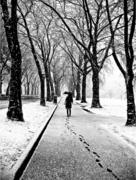 Scott Rinckenberger: Umbrellas in Black and White