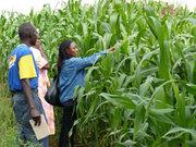 maize innovation