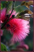 Fluffy Flower