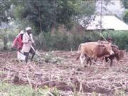 Farming in Africa