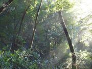 Green forest in Kakamega
