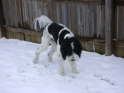 snow 2011 ,  Coach Doodle loves the snow!