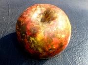 ფერადი ვაშლი