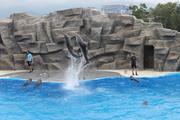 ბათუმი,დელფინარიუმი...  დელფინების შოუ