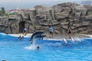 ბათუმი, დელფინარიუმი - დელფინების შოუ