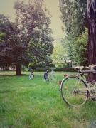 ჩვენ ვზრუნავთ ბუნებაზე და ვირჩევთ ველოსიპედს!