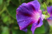 ყვავილები ყველაფერს ფარავენ, საფლავებსაც კი