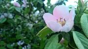 ხილს ყვავილობა უძღვის წინ