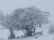 ზამთარი ხეებს უკეთ ეყობათ