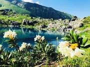 ყვავილების ზაფხული აბუდელაურის ლურჯ ტბაზე
