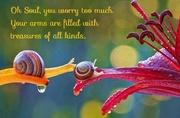 Oh Soul, ... - Rumi