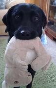 Meine kleine Hund, Holly