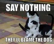 Diese hinterhältigen Katzen!!