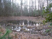 Pond in the Cove