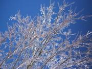 amandas snow day 022