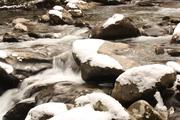Porter's Creek in February