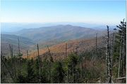 Clingmans Dome Trail Oct '07