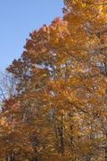 Tennessee Orange in Cataloochee Valley