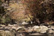 West Prong Little Pigeon River SV 6027