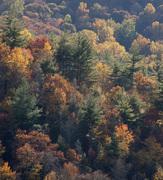Trees of Cataloochee