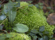 Tremont Ground Foliage