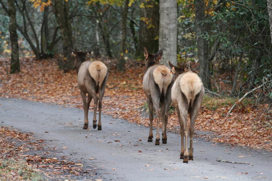 Elk Butt!