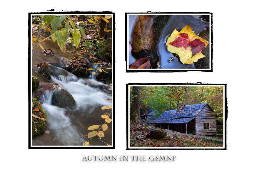 Autumn in the GSMNP