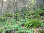 Lush moss yards